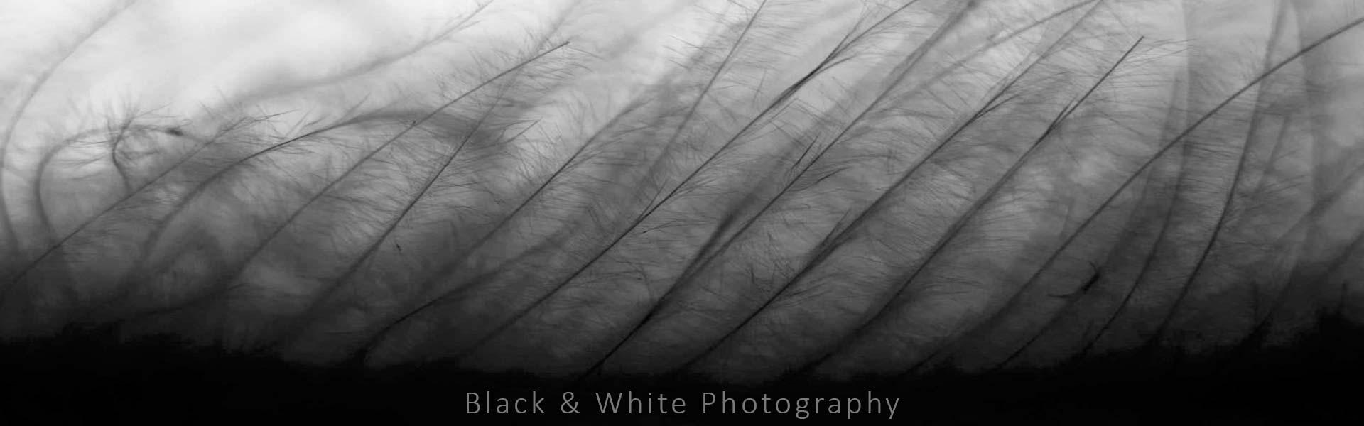 akasi siyah sefid2 - نحوه ی عکاسی سیاه و سفید