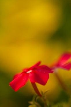 akkasi nature tabiat 26 - عکاسی از طبیعت