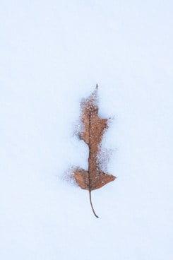 akkasi nature tabiat 27 - عکاسی از طبیعت
