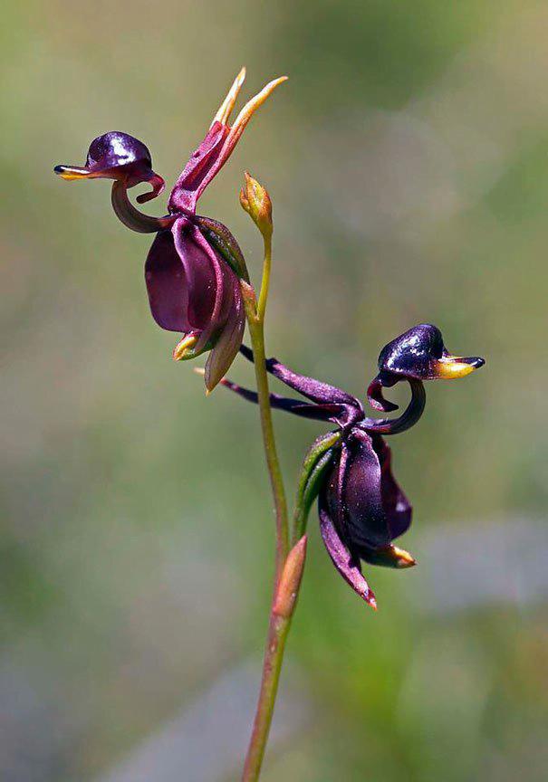 akkasi nature tabiat 29 - عکاسی از طبیعت