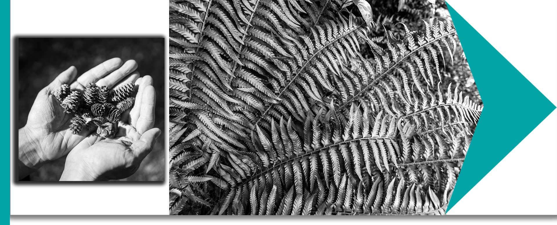 f Stunning Black and Whites 6jpg - ویژگی عکس های سیاه و سفید کدامند و چگونه میتوان به آنها دست یافت ؟