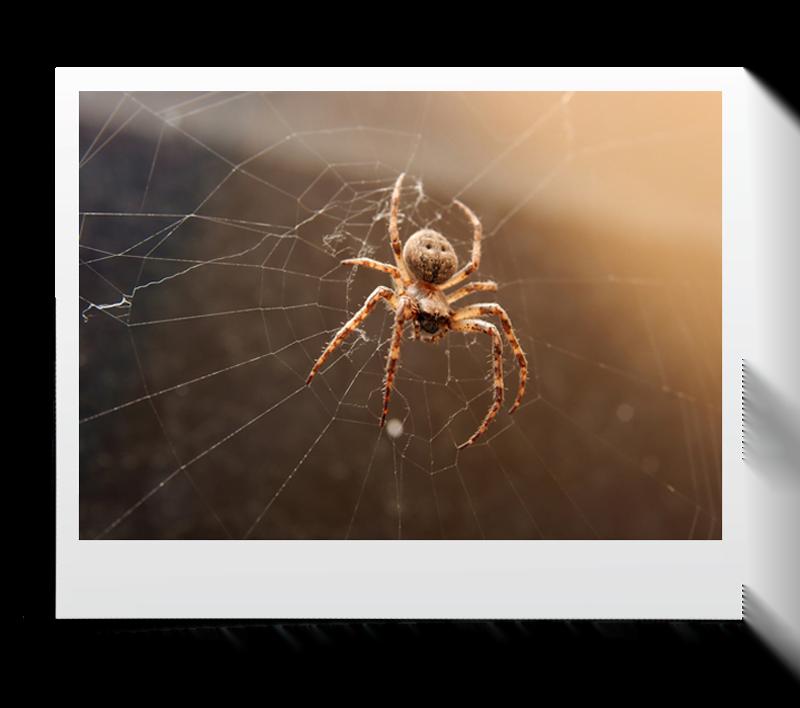 akasi macro hasharat10 - عکاسی ماکرو از حشرات