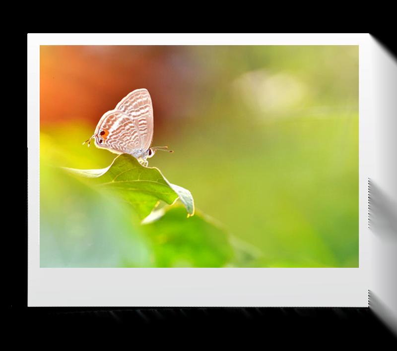 akasi macro hasharat11 - عکاسی ماکرو از حشرات