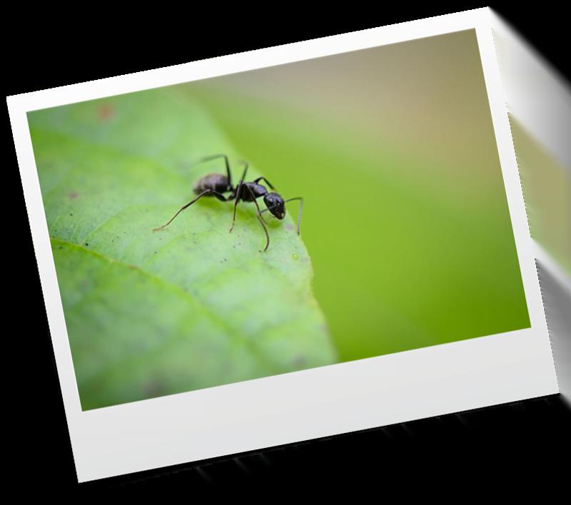 akasi macro hasharat4 - عکاسی ماکرو از حشرات