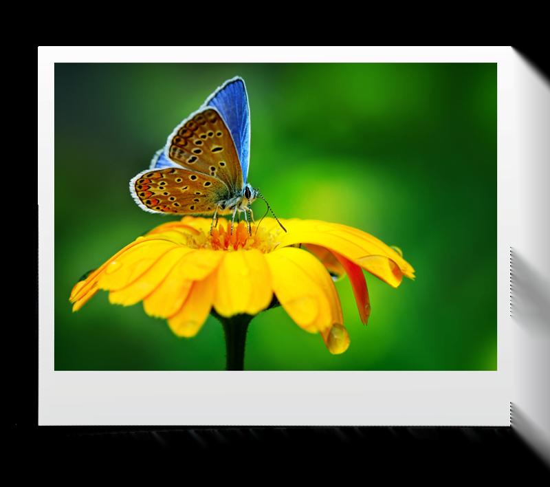 akasi macro hasharat9 - عکاسی ماکرو از حشرات