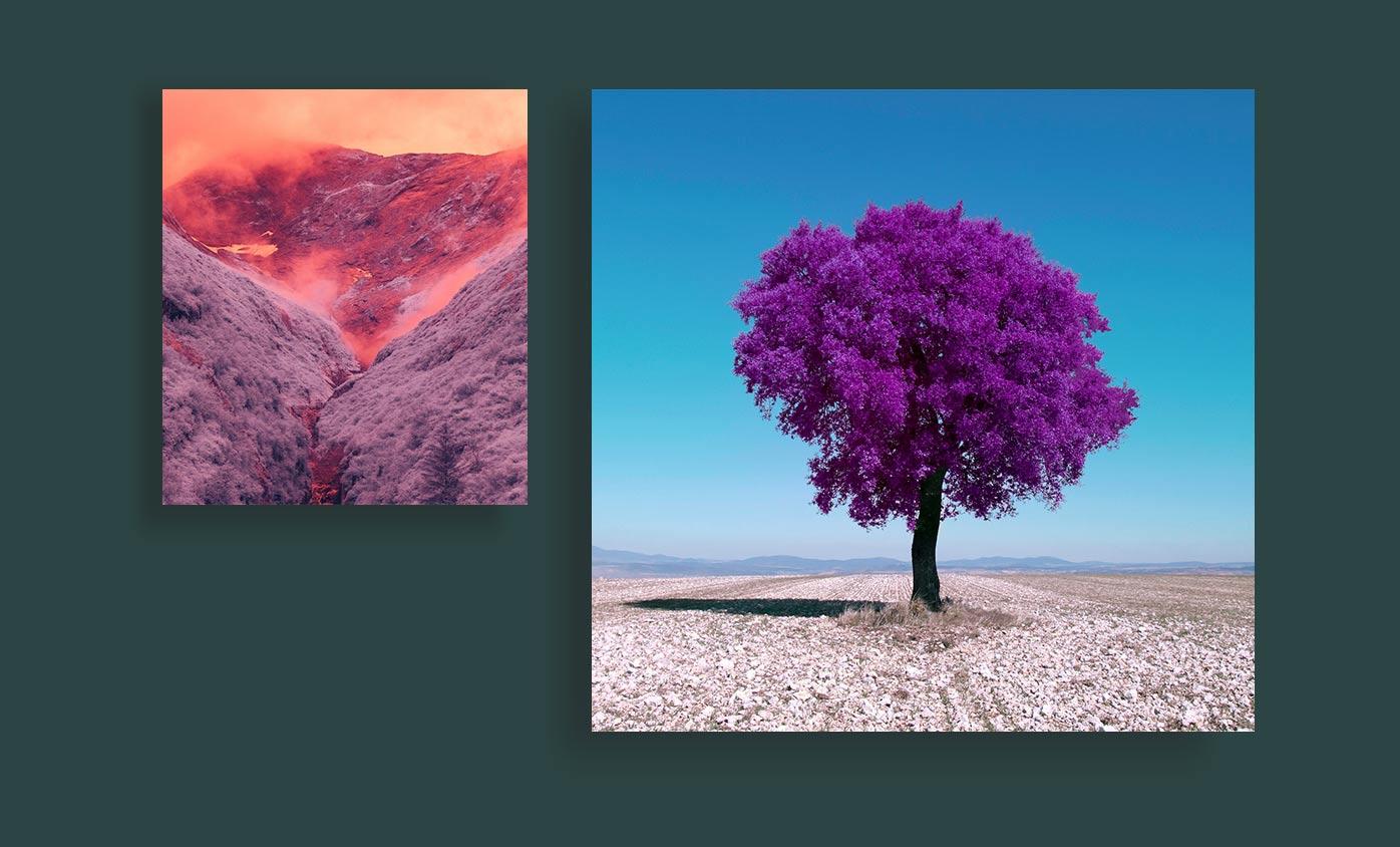 Infrared Photography - 24 مورد از انواع عکاسی که هرکدام از آنها جهان را زیباتر کرده است