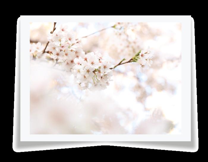 Warm and Cool Colors - رنگ ها در عکاسی