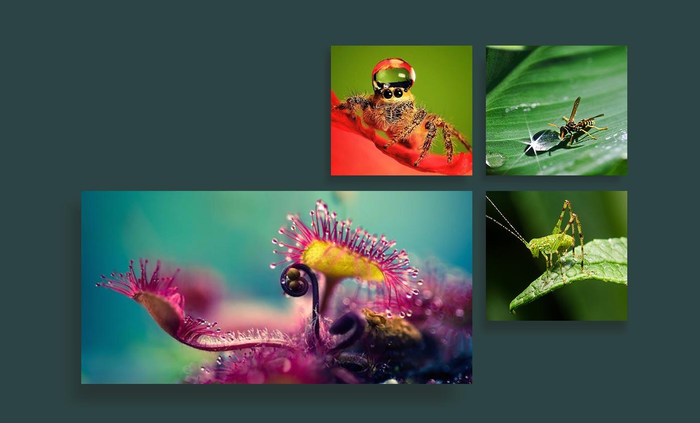 macro photography - 24 مورد از انواع عکاسی که هرکدام از آنها جهان را زیباتر کرده است