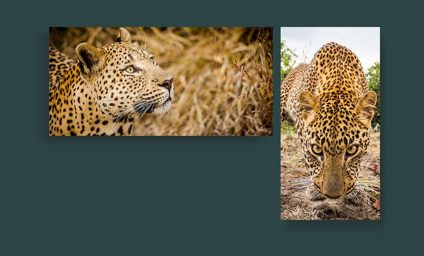 wildlife - 24 مورد از انواع عکاسی که هرکدام از آنها جهان را زیباتر کرده است