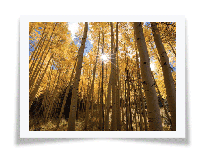 yellow photography - رنگ ها در عکاسی