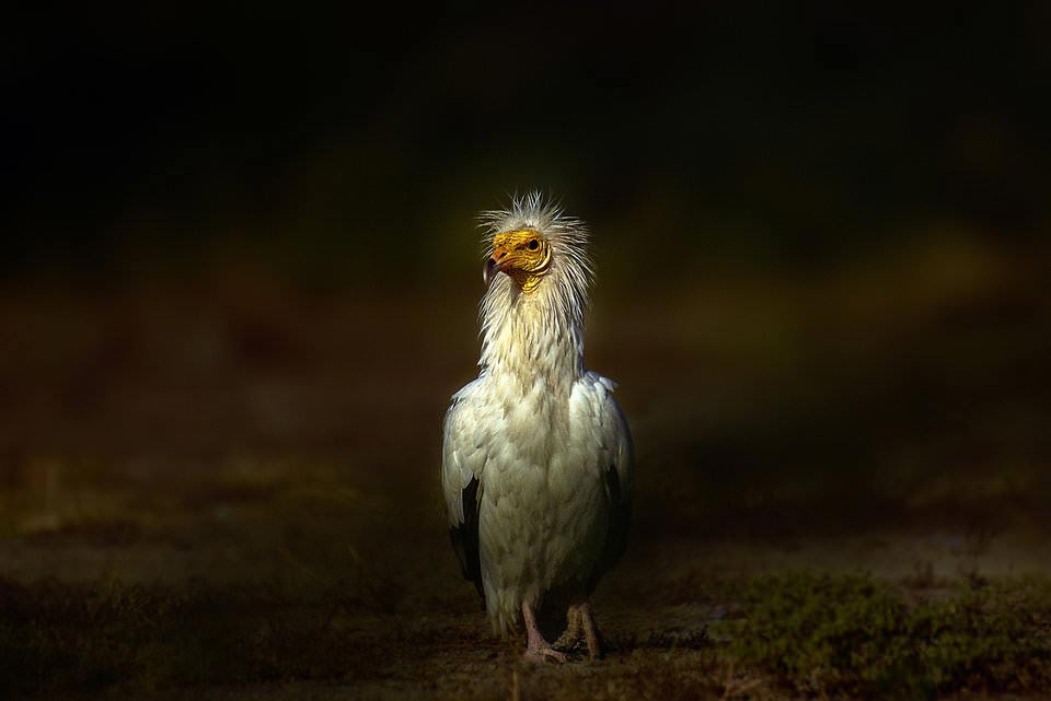 13 Contrast in Photography - درک کنتراست در عکاسی