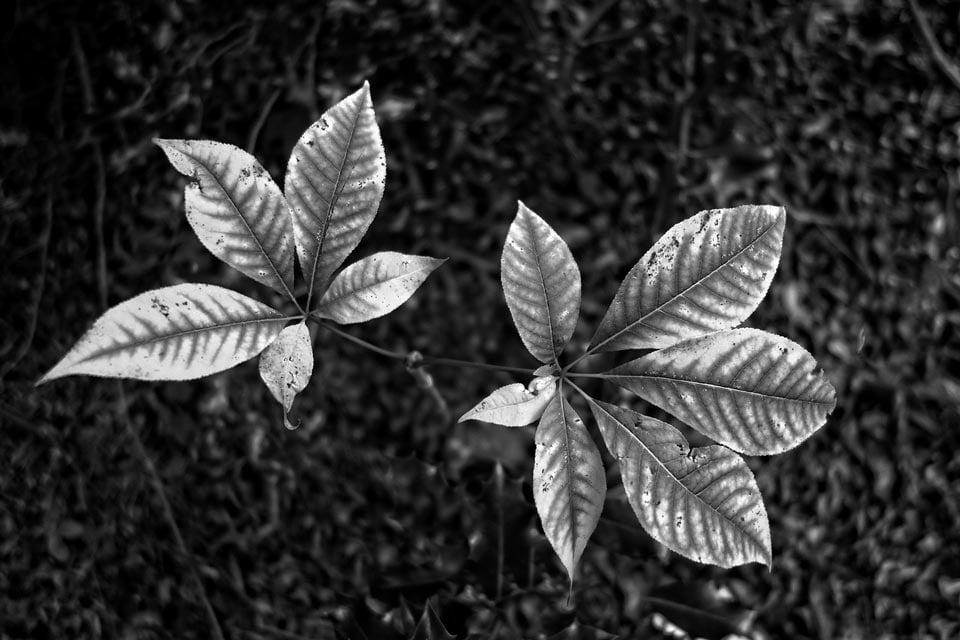 Dynamic Range photography - عکاسی مونوکروم با نور کم