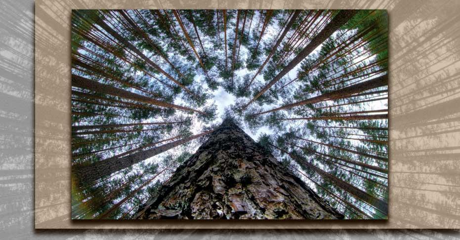 Leading Lines  Photography12F - خطوط راهنما در عکاسی