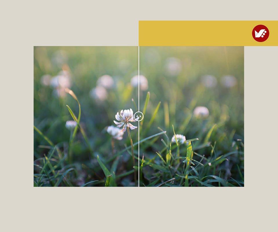 Minimizes Flare - زمان مناسب برای استفاده از هود لنز (آفتابگیر) و رسیدن به بهترین نتایج