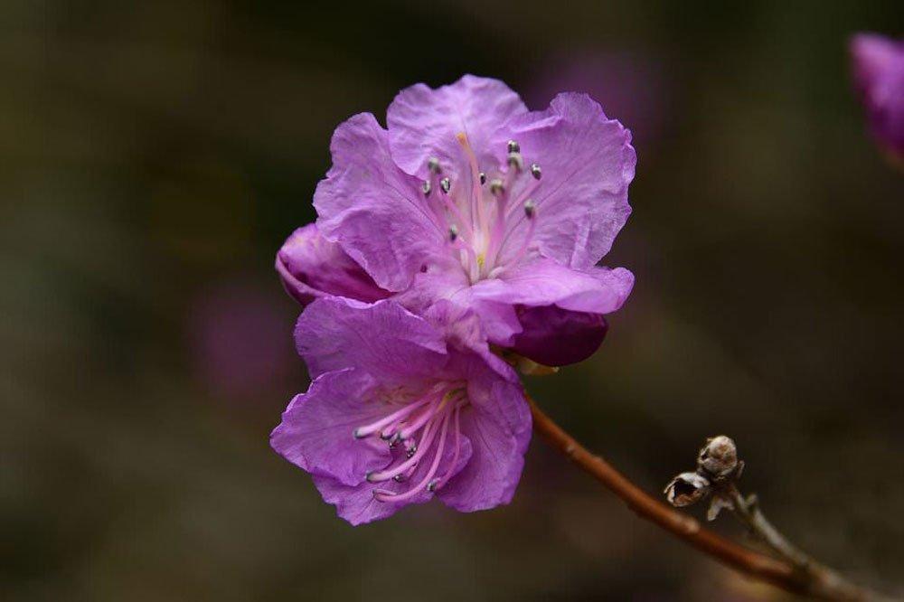 akasi gol16 - هنر عکاسی از گل ها