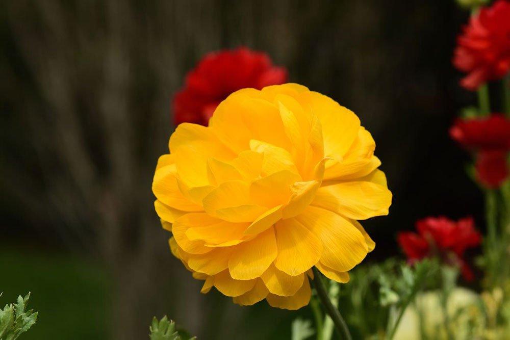 akasi gol17 - هنر عکاسی از گل ها