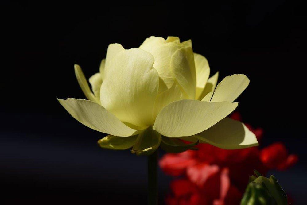 akasi gol18 - هنر عکاسی از گل ها