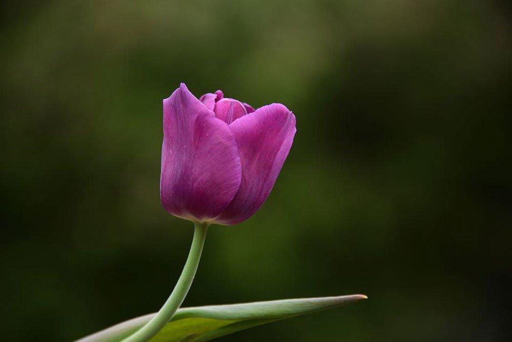akasi gol20 - هنر عکاسی از گل ها