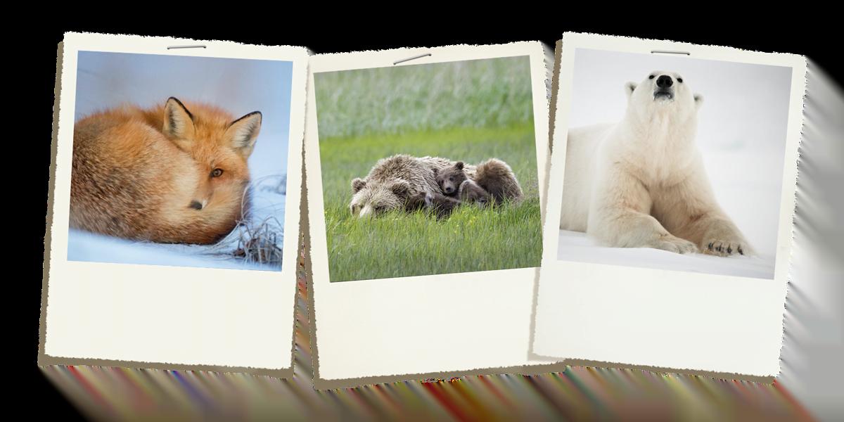 akasi hayate vahsh2 - 12 راه احساسات در عکاسی حیات وحش