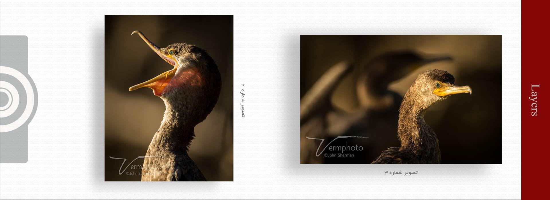 layers in photography 2 - مهمترین ویژگی های عکس خوب چیست ؟
