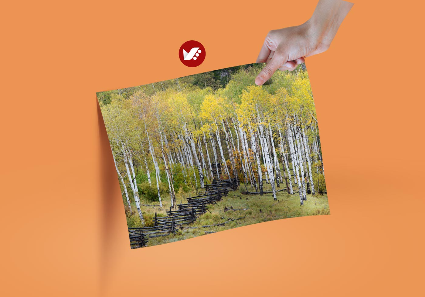 Shutter Shoc Effect on Image Quality - شاتر پرده جلو الکترونیکی